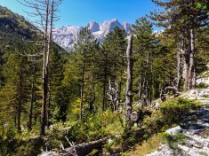 Fores in Valbona